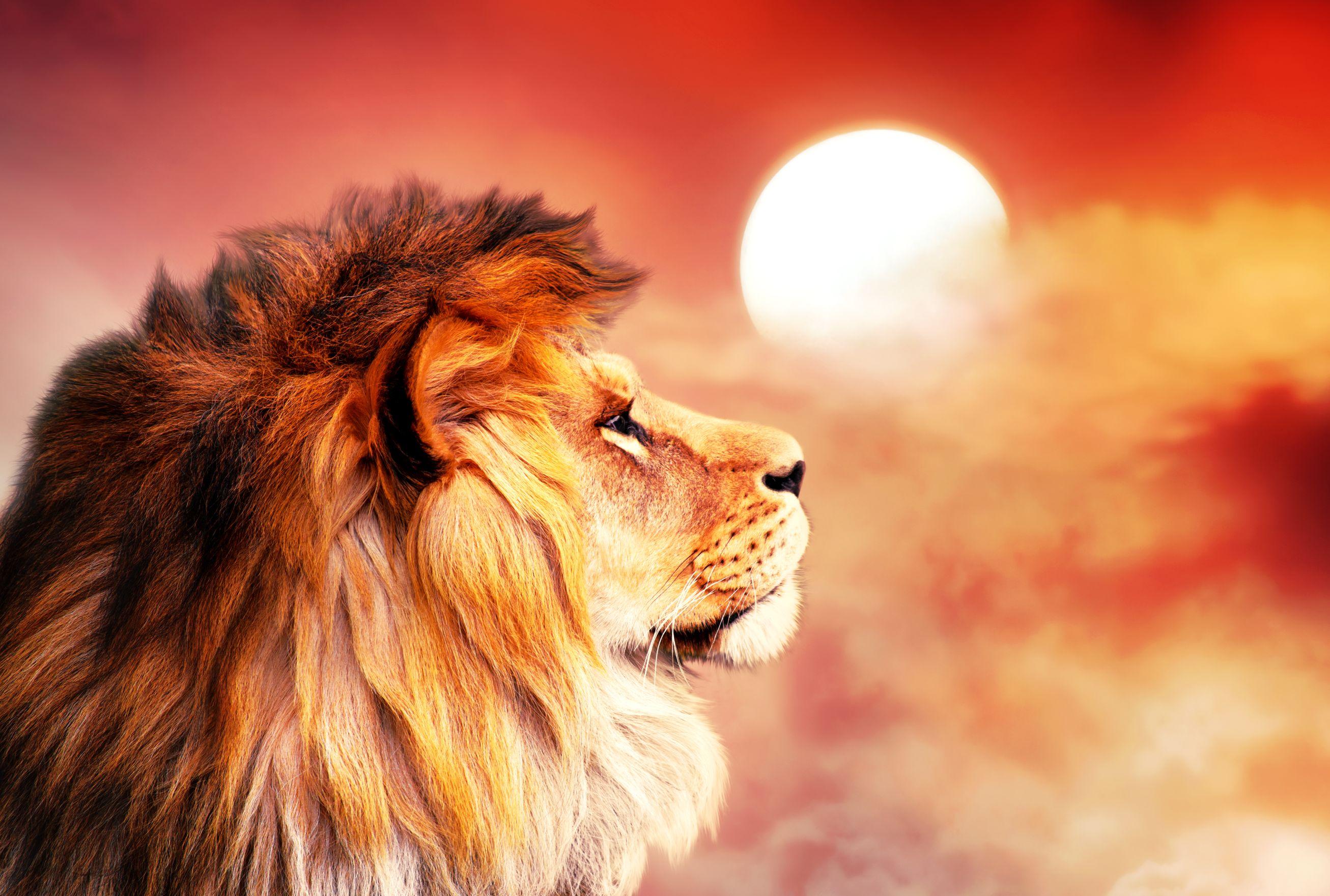 【動物占い】ライオンのあなたの性格は?カラー別の性格・相性はこれ